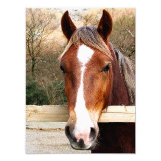 CHESTNUT HORSE PHOTO PRINT