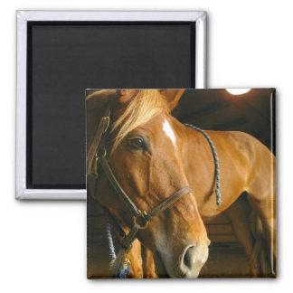 Chestnut Horse Photo Square Magnet