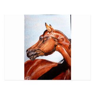 Chestnut horse postcard