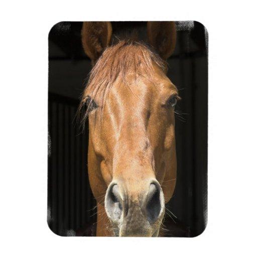 Chestnut Horse Premium Magnet Rectangular Magnet