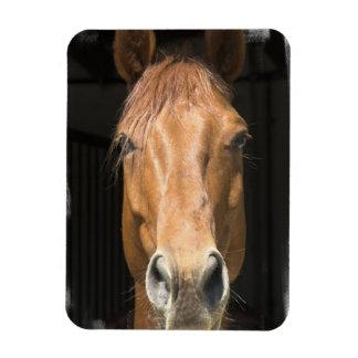 Chestnut Horse Premium Magnet
