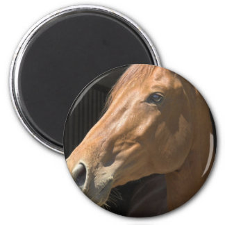 Chestnut Horse Profile Magnet Fridge Magnet