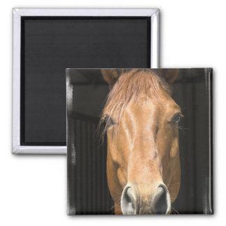 Chestnut Horse Square Magnet Magnets