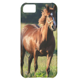 Chestnut Horse Standing iPhone 5C Covers
