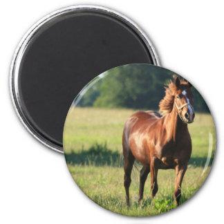 Chestnut Horse Standing Magnet
