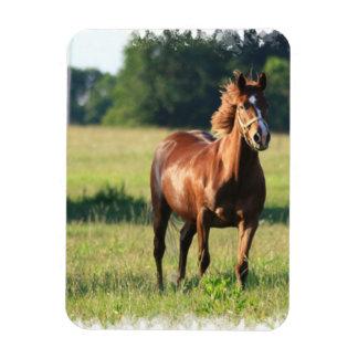Chestnut Horse Standing Premium Magnet