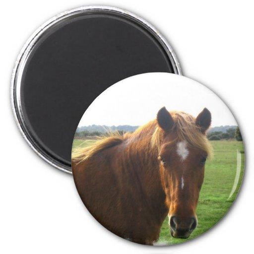 Chestnut Horse with a Blaze Magnet Fridge Magnet
