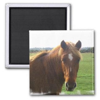 Chestnut Horse with a Blaze Square Magnet Refrigerator Magnet