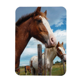 Chestnut Horse with White Blaze & Friends Rectangular Photo Magnet