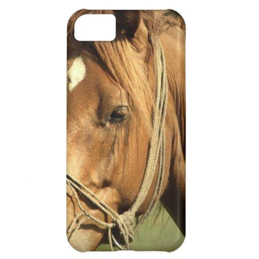 Chestnut Pony iPhone 5C Cases
