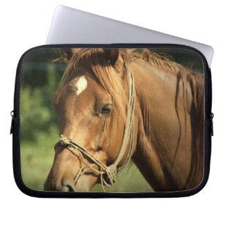 Chestnut Pony Electronics Bag Laptop Sleeves