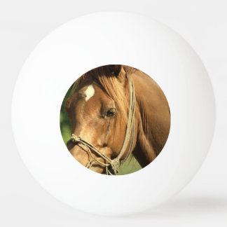 Chestnut Pony Ping Pong Ball
