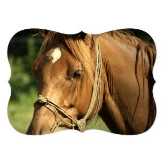 Chestnut Pony 13 Cm X 18 Cm Invitation Card