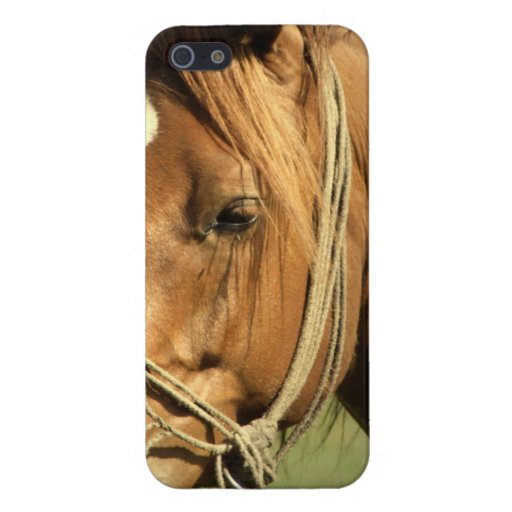 Chestnut Pony iPhone 5 Cover