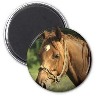 Chestnut Pony Magnet Fridge Magnets
