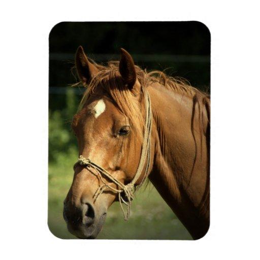 Chestnut Pony Premium Magnet Vinyl Magnet