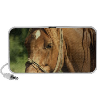 Chestnut Pony Speakers