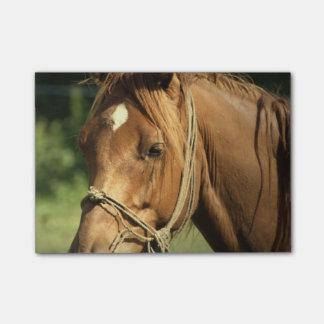 Chestnut Pony Post-It Note