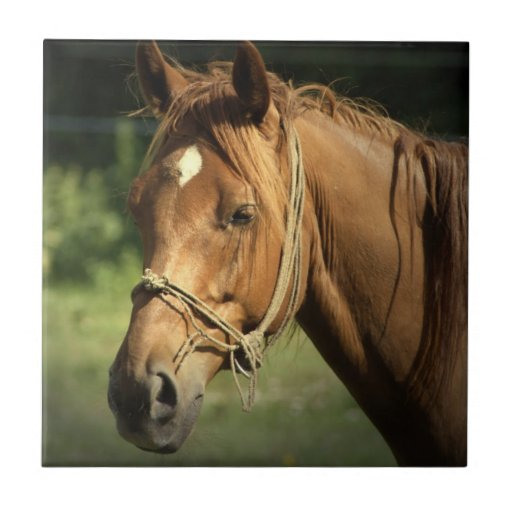 Chestnut Pony Tile
