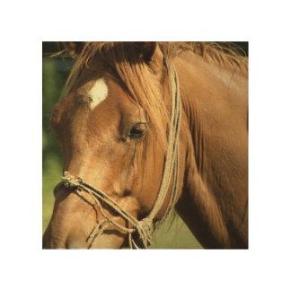 Chestnut Pony Wood Print