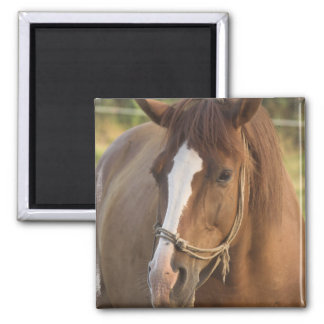 Chestnut Quarter Horse Magnet Fridge Magnet