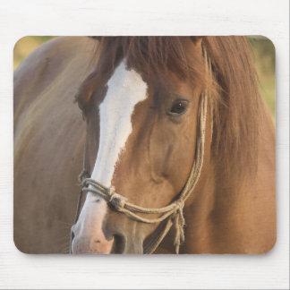 Chestnut Quarter Horse Mouse Pad