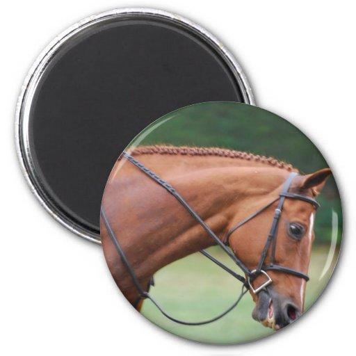 Chestnut Show Horse Magnet Refrigerator Magnets