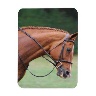 Chestnut Show Horse Premium Magnet Magnets