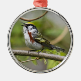 Chestnut-sided Warbler Christmas Ornament