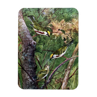 Chestnut-sided Warblers Feeding Young Rectangular Photo Magnet