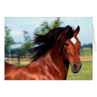 Chestnut Stallion Galloping Along A Path Card