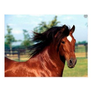 Chestnut Stallion Galloping Along A Path Postcard