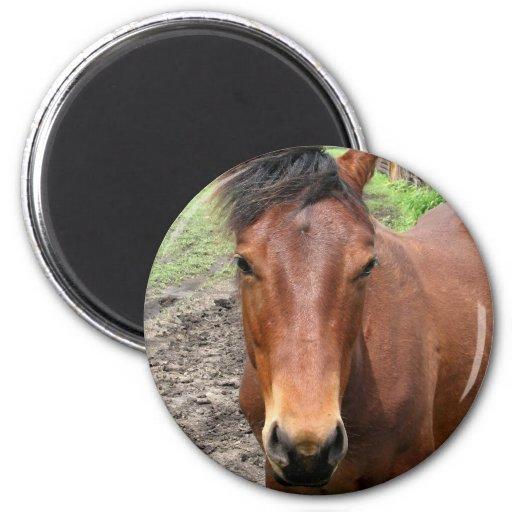 Chestnut Thoroughbred Horse Magnet Magnet
