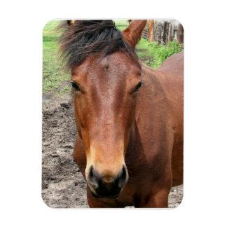 Chestnut Thoroughbred Horse PremiuM Magnet Vinyl Magnet