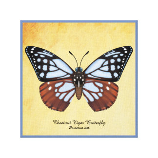Chestnut Tiger Butterfly Canvas Print