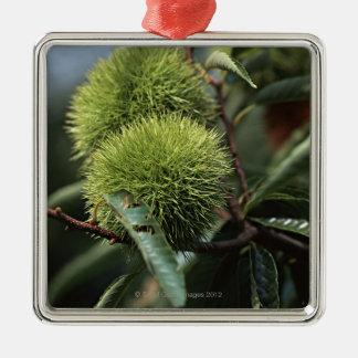 Chestnut Tree Silver-Colored Square Decoration