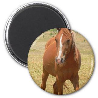 Chestnut Yearling Horse Round Pin 6 Cm Round Magnet
