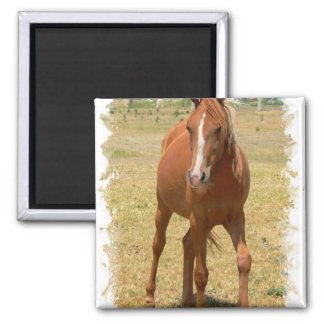 Chestnut Yearling Horse Square Magnet Fridge Magnets