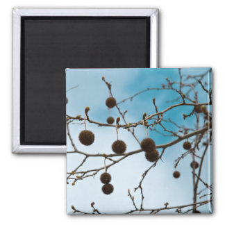 Chestnuts Magnet