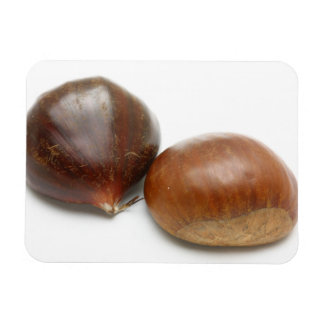 Chestnuts Rectangle Magnets