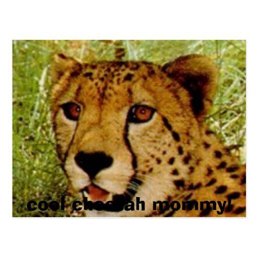 chetface, cool cheetah mommy! postcard