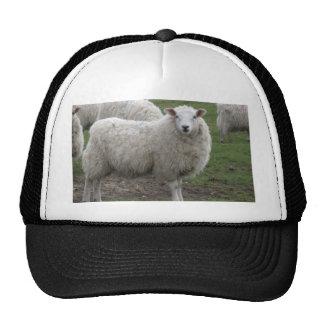 Cheviot sheep trucker hat