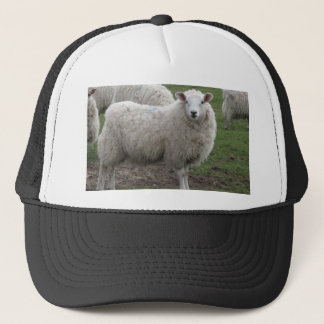 Cheviot sheep trucker hat