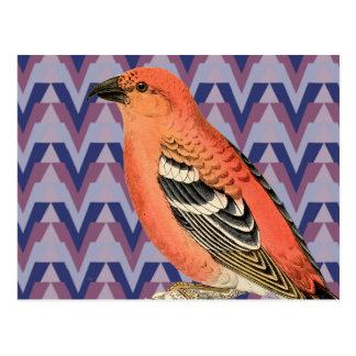 Chevron and Vintage Pink Bird Postcard