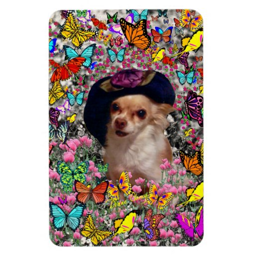 Chi Chi in Butterflies  - Chihuahua Puppy in Hat Rectangle Magnet