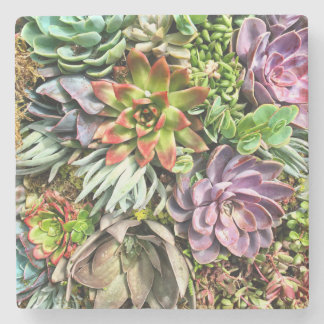 Chic Modern Colorful Succulent photo pattern Stone Beverage Coaster