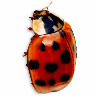 Chic Spotted Ladybug Photo Sculpture Magnet