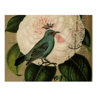 Chic Vintage Bird camellia french botanical art Postcard