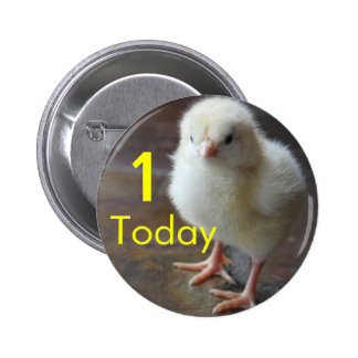 Chick 1st birthday button one today