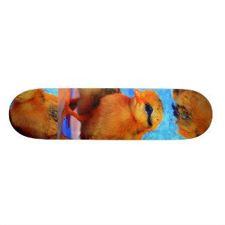 Chick-A-Dee-Light Skateboard - Customizable Skateboards